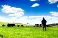 'Australian dairy producers fail to understand overseas markets'